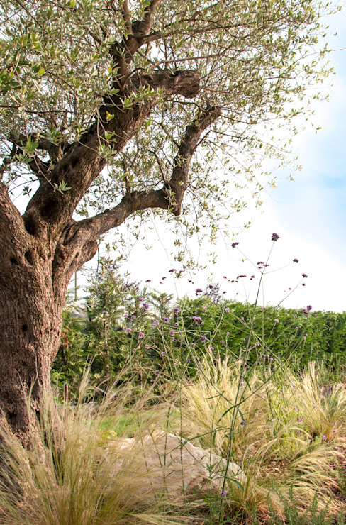 Cerco l'estate tutto l'anno di exTerra | consulenze ambientali e design nel verde Mediterraneo