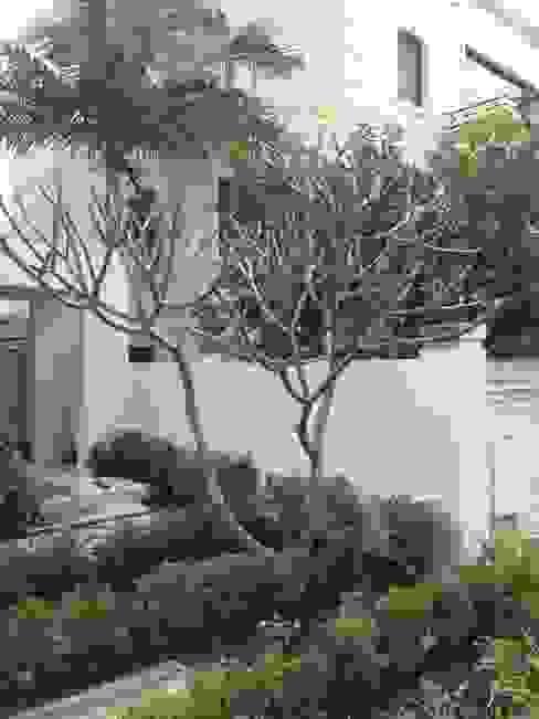 Applecross Modern garden by Project Artichoke Modern
