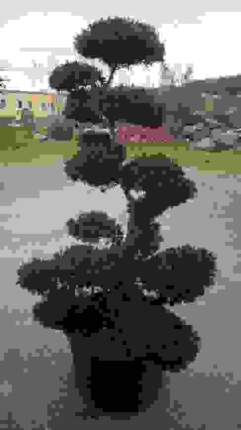 Garden by CanlıBahçe Fidancılık