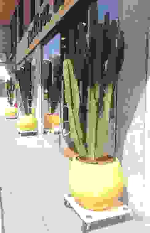 Cactus en la entrada de Natura Casa Balcones y terrazas de estilo moderno de Asilvestrada Moderno