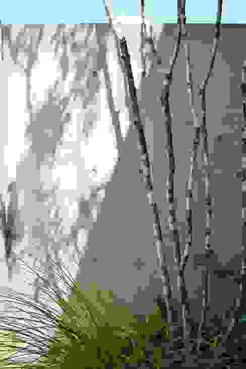 Jardins modernos por LIVING DESIGN Moderno