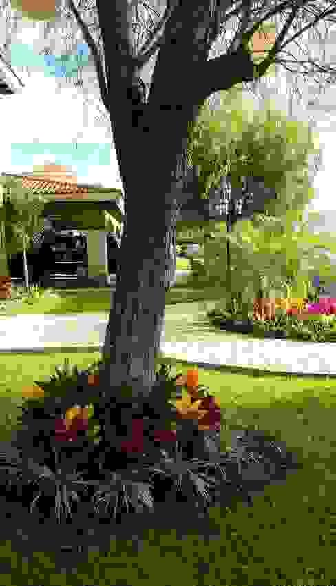 Jardines de estilo  de EcoEntorno Paisajismo Urbano, Moderno