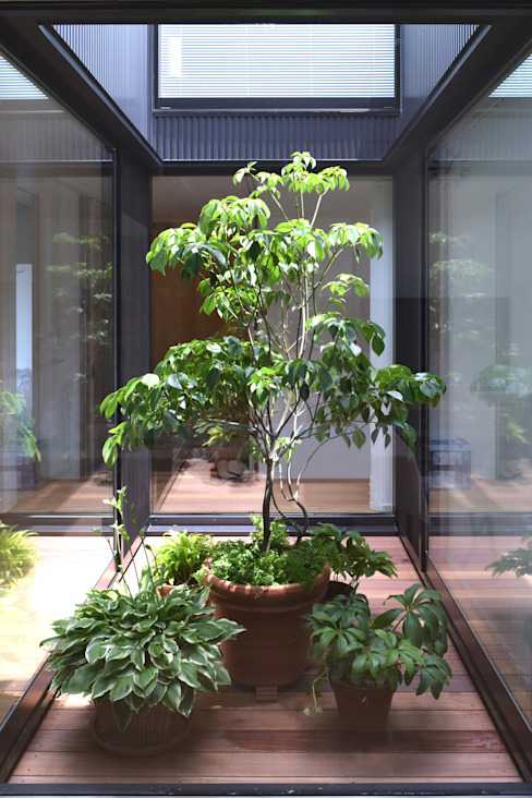LIGHT COURT with PLANTS Modern garden by FURUKAWA DESIGN OFFICE Modern