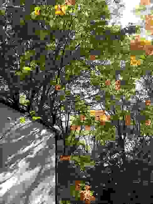 中庭から(秋): MA設計室が手掛けた庭です。,モダン