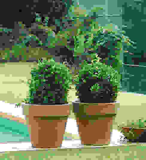 de Hydroponika - Wnętrz i zieleń Clásico