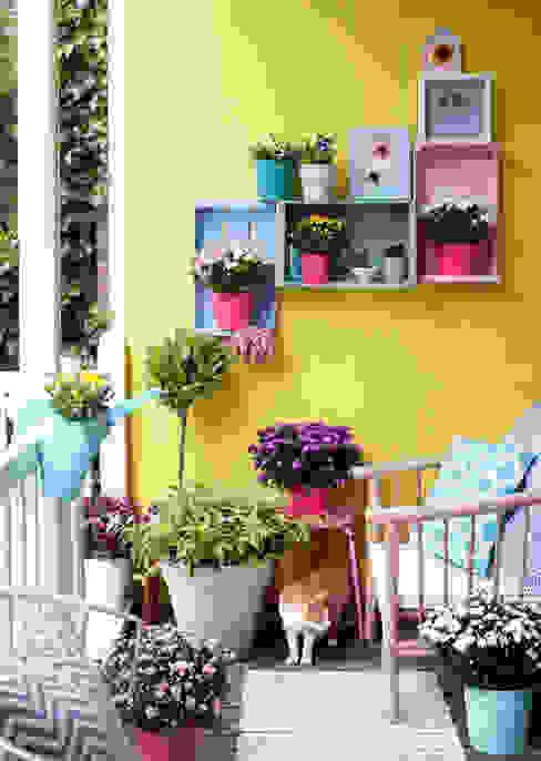 Сады в . Автор – Pflanzenfreude.de,