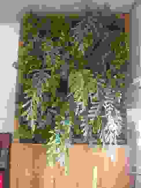 Tropikal Bahçe Top Gardens Paisagismo Vertical Tropikal