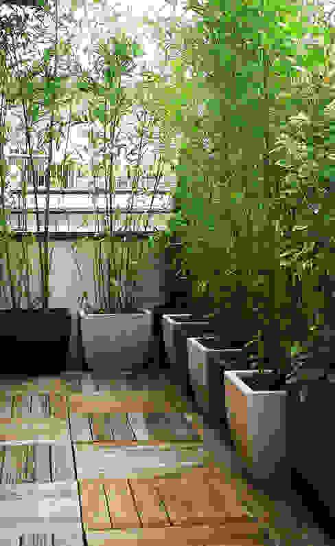 Minimalist style garden by Skéa Designer Minimalist Bamboo Green