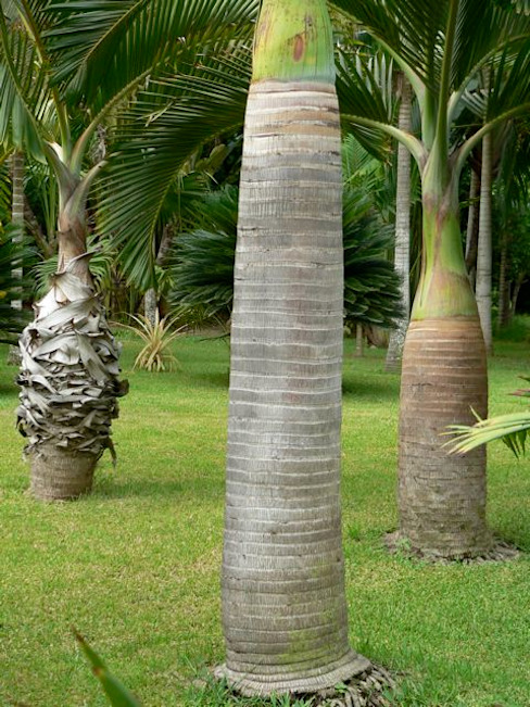Tropical America landscaping สวน