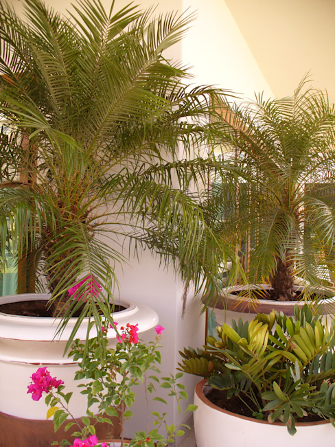 Jardin tropical par Tropico Jardineria Tropical