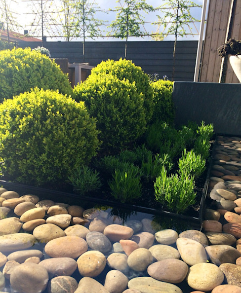 Tuin in Rhoon Moderne tuinen van Hoveniersbedrijf Tim Kok Modern