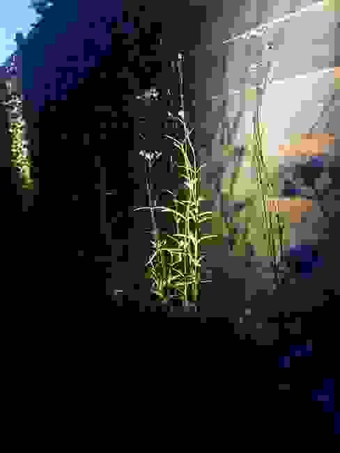 Jardin moderne par Hoveniersbedrijf Tim Kok Moderne