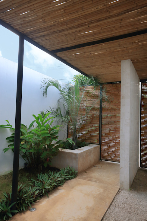 Tropical style garden by FGO Arquitectura Tropical Bamboo Green