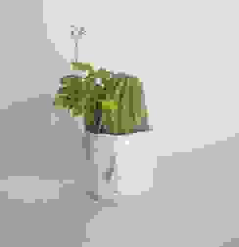 par Pompilio Plants Moderne