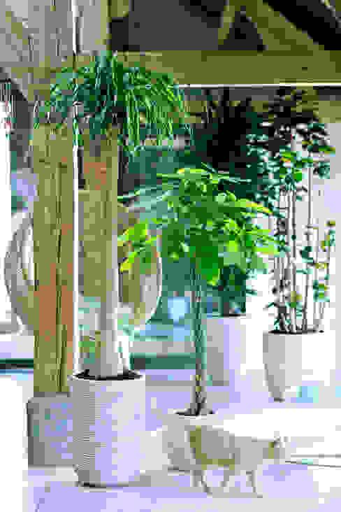 Die Zimmerbäume – Zimmerpflanzen des Monats Januar 2016 Pflanzenfreude.de Raumbegrünung