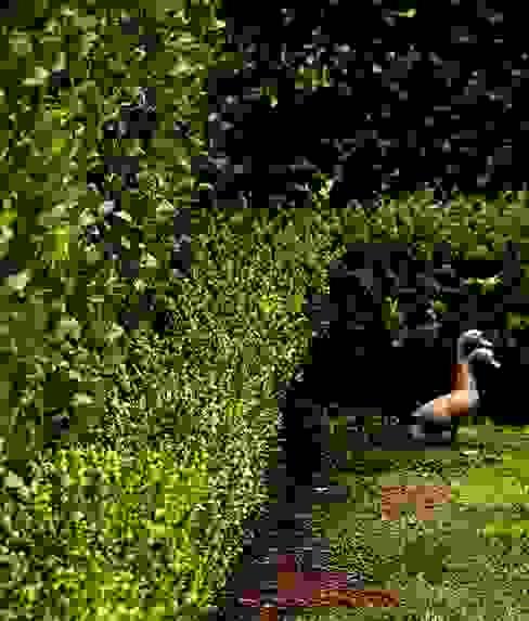 CASA EN SAN ISIDRO: Jardines de estilo  por Arq. PAULA de ELIA & Asociados