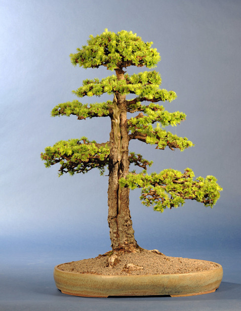 Bonsai-Shopping JardinesPlantas y flores