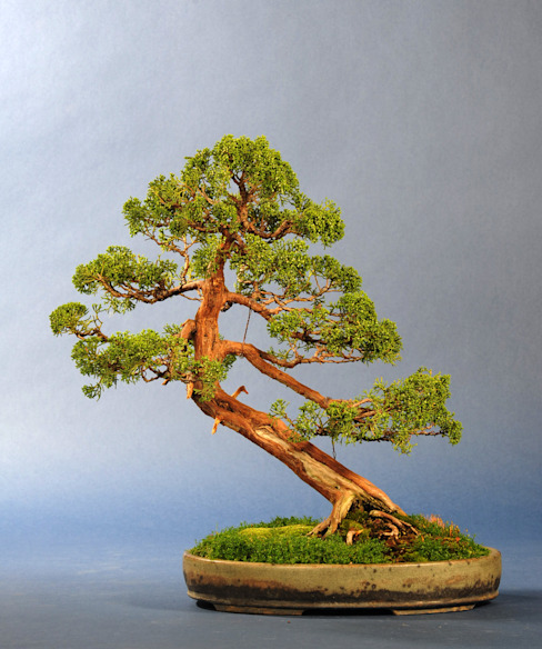 Oleh Bonsai-Shopping Asia