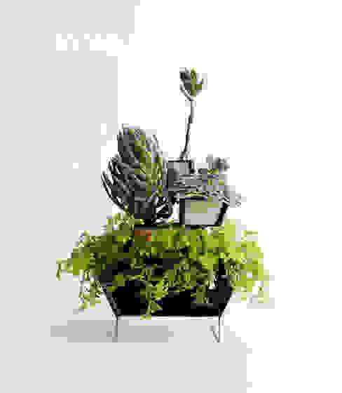 作品: Vivoが手掛けた折衷的なです。,オリジナル