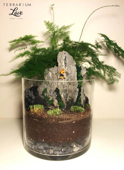 Interior landscaping by Terrarium love