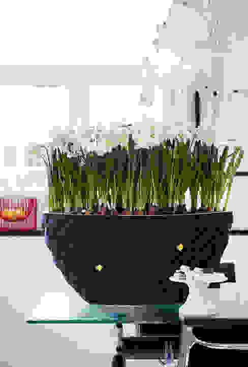 Pflanzenfreude.de İç Dekorasyon