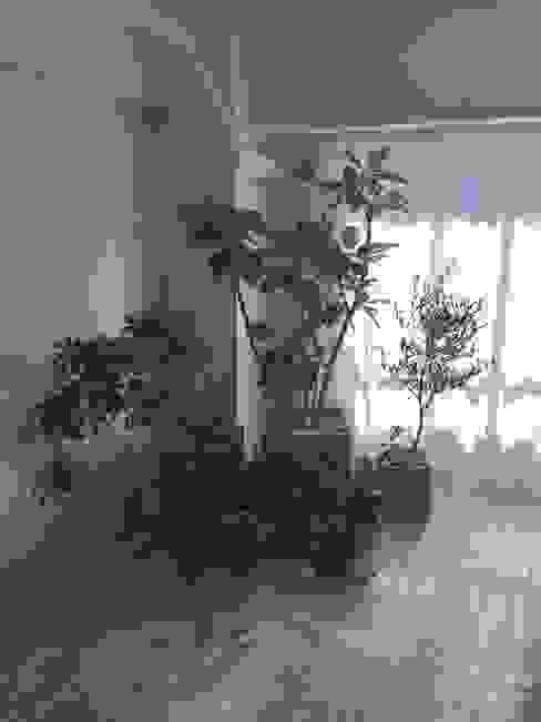 個人邸のインドアガーデン: Shikinowa Designが手掛けた庭です。,モダン