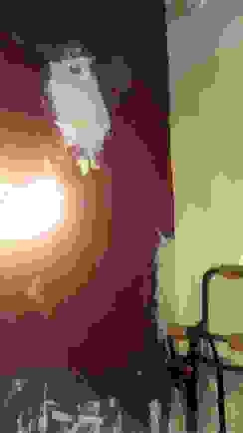 جدران تنفيذ ER Design.    @eugeriveraERdesign, تبسيطي