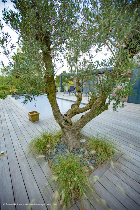 Jardines de estilo moderno de Osmoz Paysage Moderno