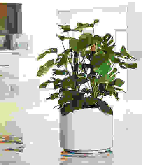 Photos, la planta trepadora Hobby Flower HogarPlantas y accesorios
