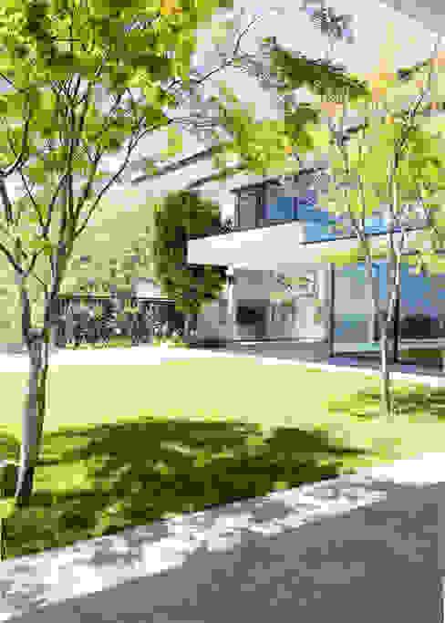 Сад в стиле модерн от Jenny Mills Architects Модерн