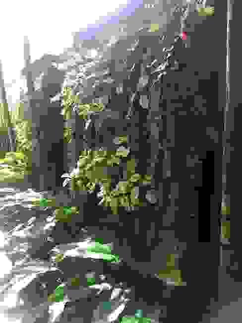 Casa M.P. Eneida Lima Paisagismo Jardins tropicais