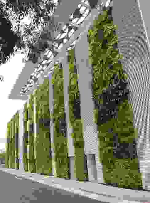 TERRA Arquitectura + Paisajismo Modern garden