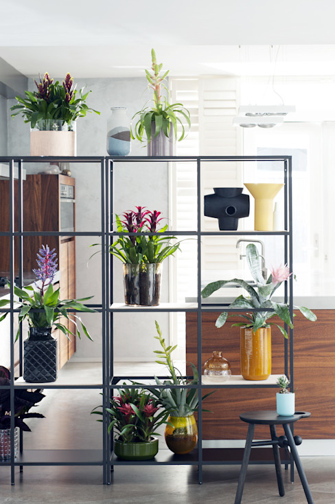 Interior landscaping تنفيذ Pflanzenfreude.de,