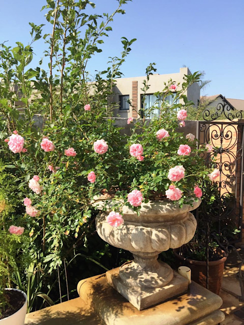 Vườn phong cách Địa Trung Hải bởi Gorgeous Gardens Địa Trung Hải