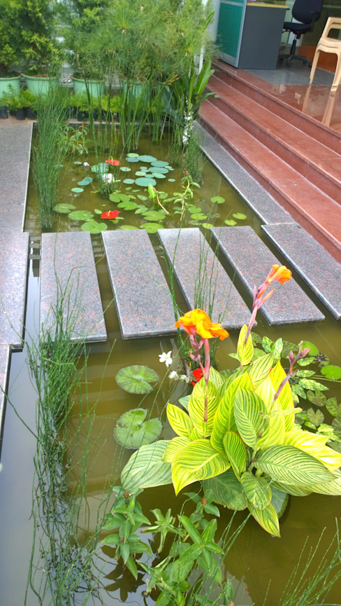 Natural Pond Entryway Cherry Garden and Landscapers Tropical style garden