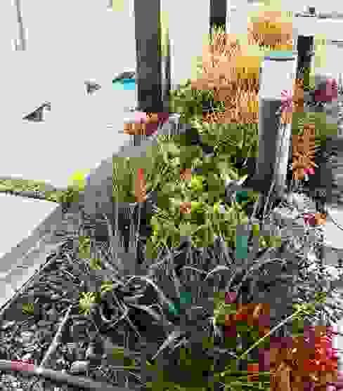 Vibrant water wise planting Modern Garden by Acton Gardens Modern