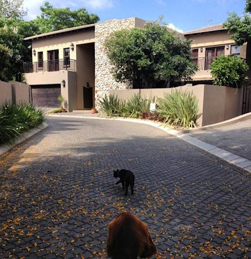 Residential project Sandton:  Houses by CS DESIGN,