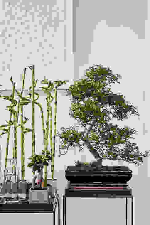 Zimmerpflanze des Monats von Pflanzenfreude.de Asiatisch