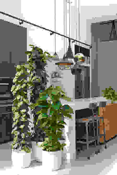 Zimmerpflanze des Monats August: modern  von Pflanzenfreude.de,Modern