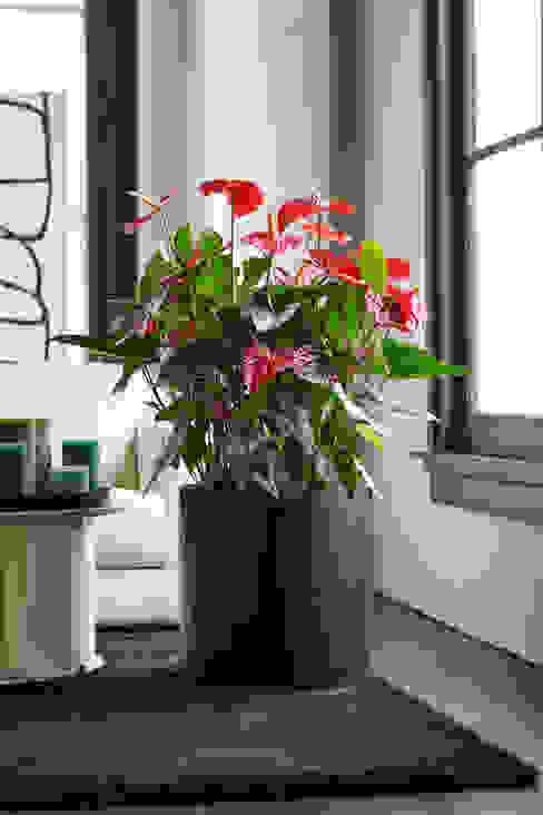 Die Anthurie wirkt am besten umgarnt von einem dezenten, dunklen Topf: modern  von Pflanzenfreude.de,Modern