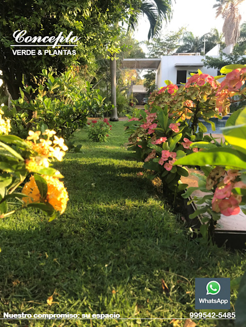 DISEÑO DEL PAISAJE Productores de plantas Concepto Verde Jardines minimalistas