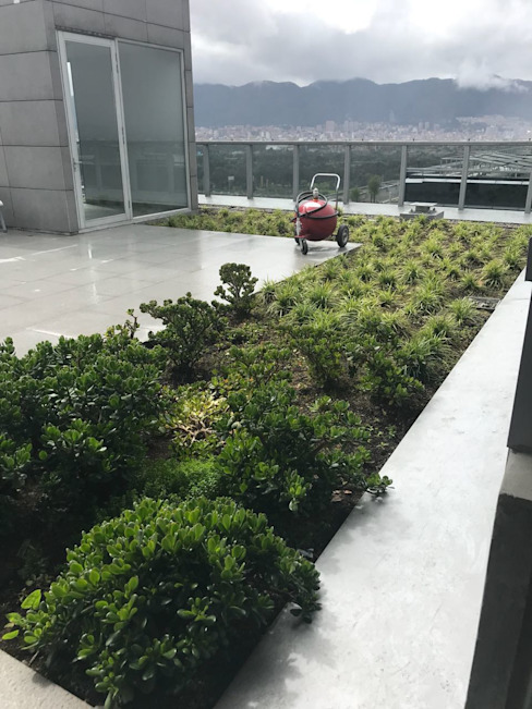 Helecho SAS Flat roof