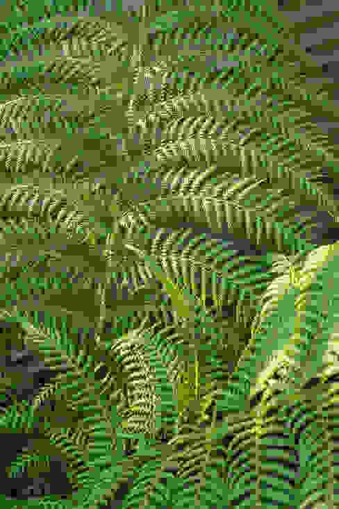 Evergreen fern Earth Designs Jardins zen
