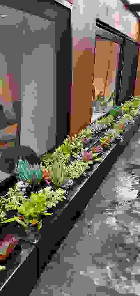 Jardineras con suculentas PASARFLOR Jardines modernos