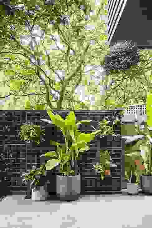 THANH TUNG - HOMIFY Modern Garden