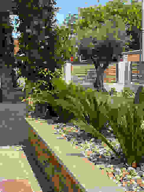 Un giardino esotico _ Cycas Camilla Poggi | Architetto Paesaggista Giardino in stile mediterraneo