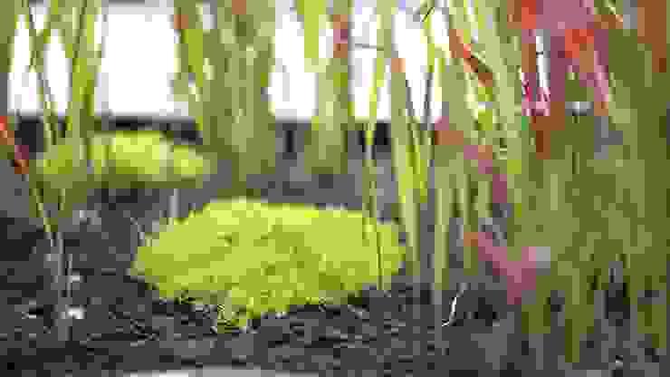 Jardin Zen Jardin moderne par Art Bor Concept Moderne