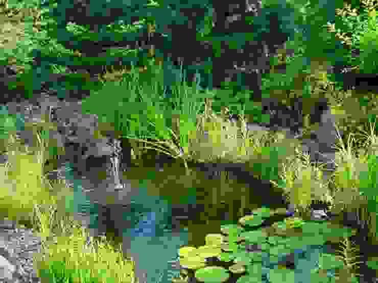 クラシカルな 庭 の aquariumpflanzen.net クラシック