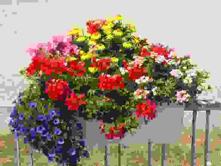 Harro's Pflanzenwelt Balconies, verandas & terraces Plants & flowers