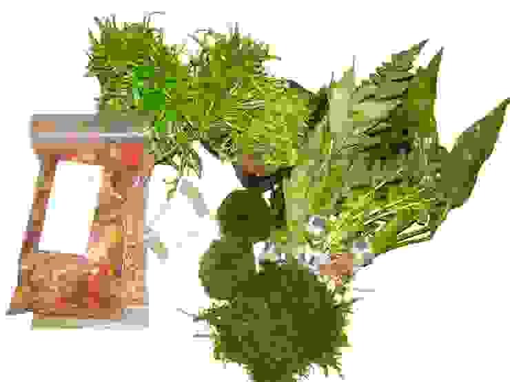 Komlette Setangebote für verschiedene Aquariumgrößen. von aquariumpflanzen.net Klassisch